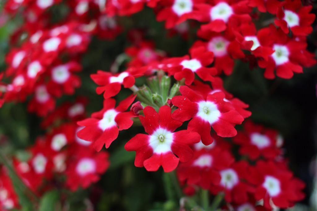 フラワータワー内の赤い花