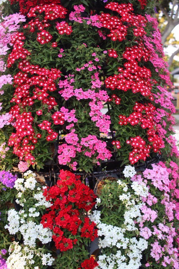 赤い花が鮮やかで綺麗!